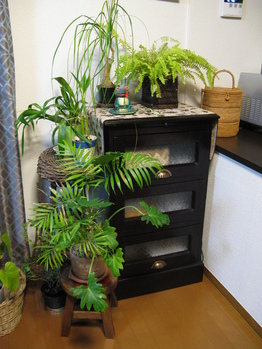 緑と木の温もり溢れるアジアンなお部屋